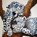 AMIS LEOPARDS - LEOPARD FRIENDS