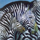ENFANT ZEBRE - ZEBRA'S CHILD